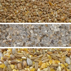 Poultry Feed & Duck Food
