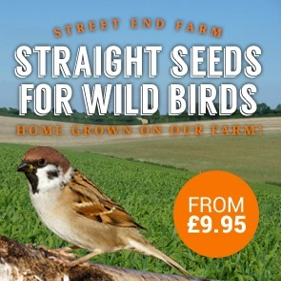 Straight seeds for garden birds