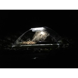 Illuminated hedgehog feeder designed by Simon King