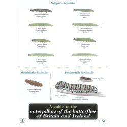 Field Guide to Caterpillars