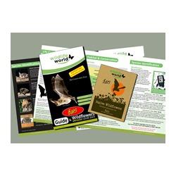 Wildflower Attractor Pack - Bats
