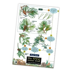 Field Guide - Tree Name Trail