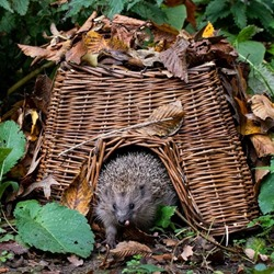 Square Hedgehog Basket