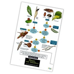 Field Guide to Bugs on Bushes