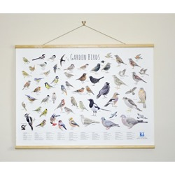 Hanging ID Wall Chart - Featuring Garden Birds