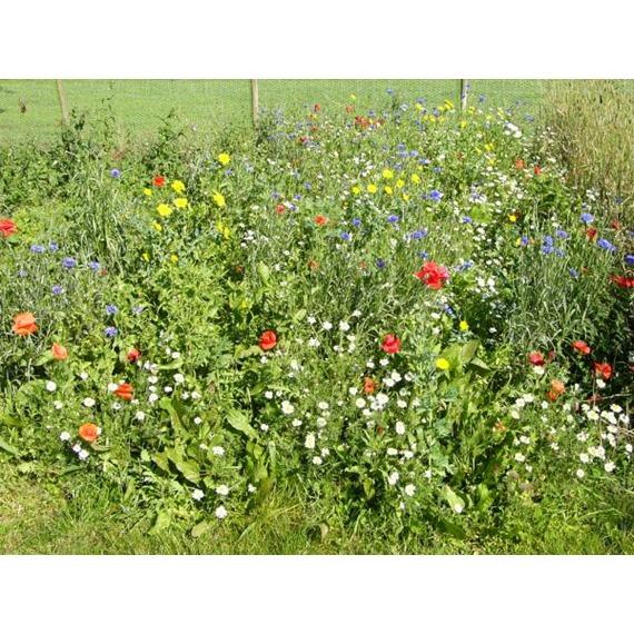 Standard Wildflower Mixture