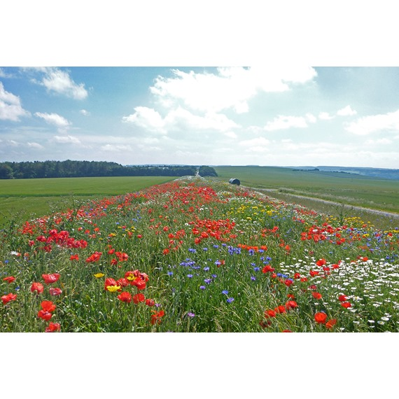 Standard Wildflower Seed Mix