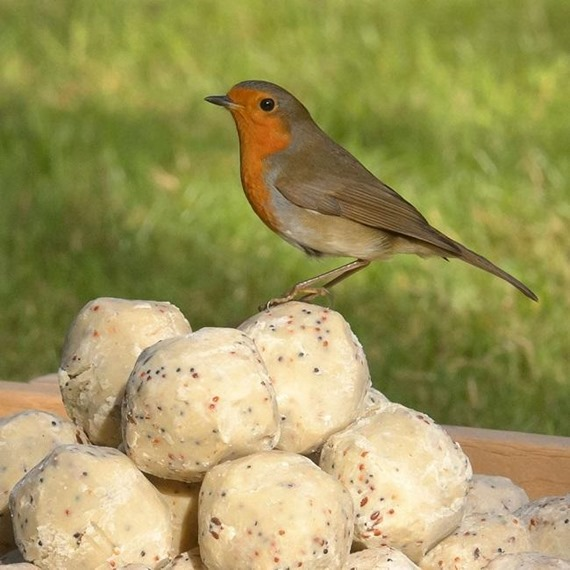 Bumper Box of 150 Suet-To-Go™ Fatballs with Insect