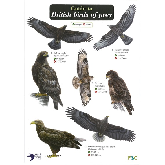 Field Guide - British Birds of Prey