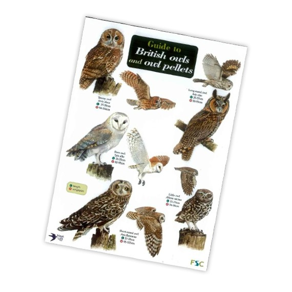 Field Guide to British Owls and Owl Pellets