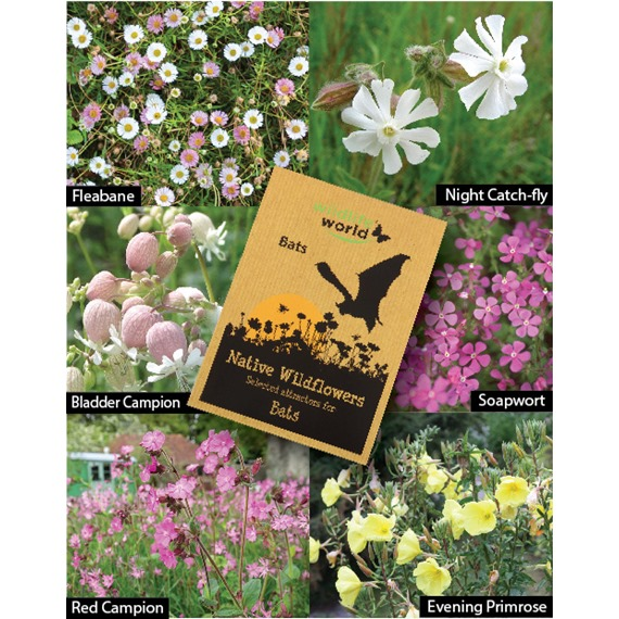 Native Wildflower Seeds for Bats