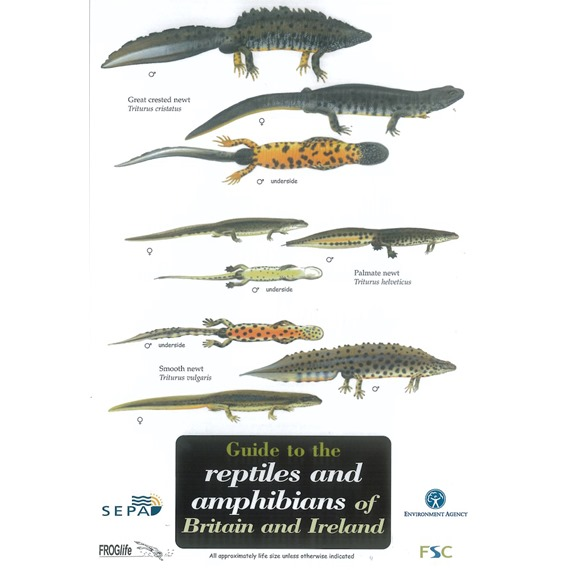 Field Guide to Reptiles and Amphibians of Britain and Ireland