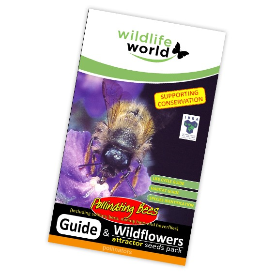 Wildflower Attractor Pack - Pollinating Bees
