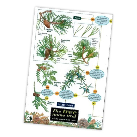 Field Guide to Trees