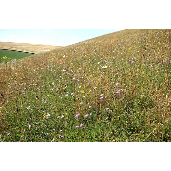 Old English Meadow Mixture