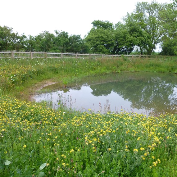 Pond Edge 100% Wildflower Mixture