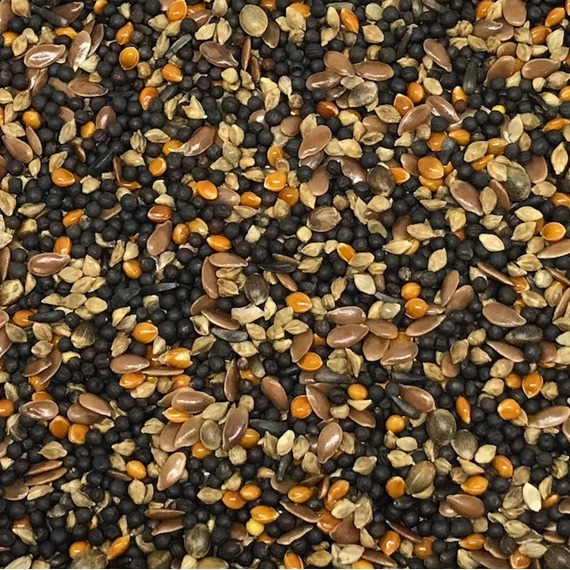 Canary Conditioning Seed Mix