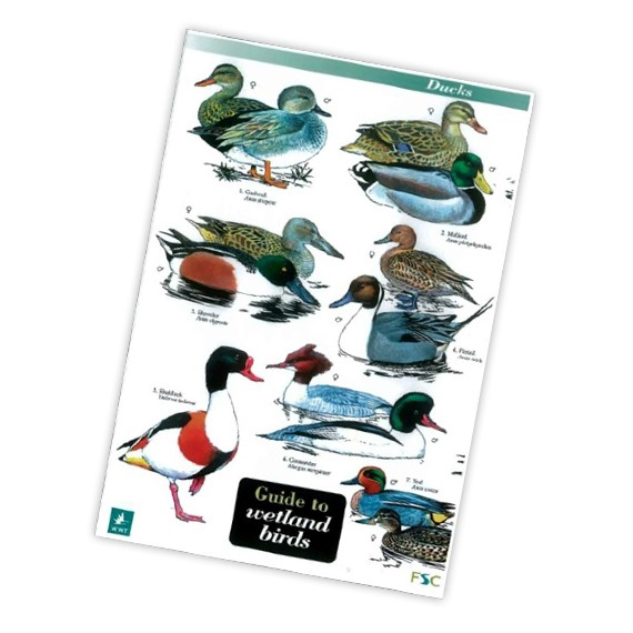 Field Guide to Wetland Birds