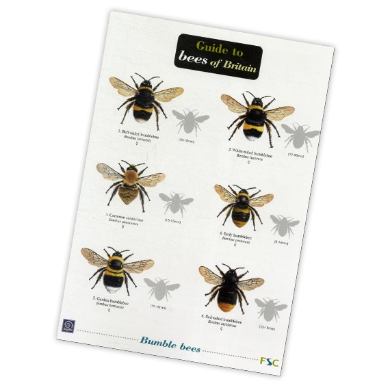 Guide to Bees of Britain