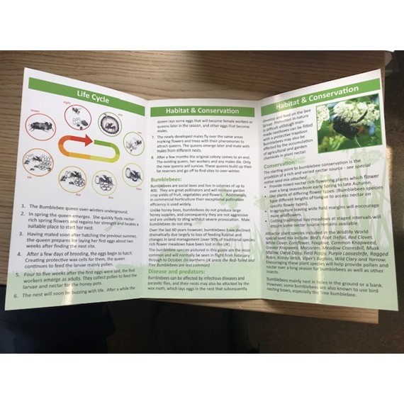 Species Guide to UK Bumblebees