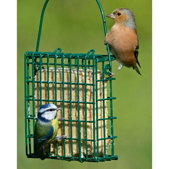 Single Suet Feast Holder