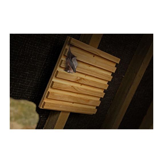 Simon King Bat Rack Hanging Roost