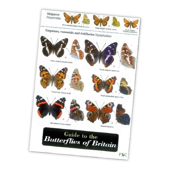 Field Guide to the Butterflies of Britain
