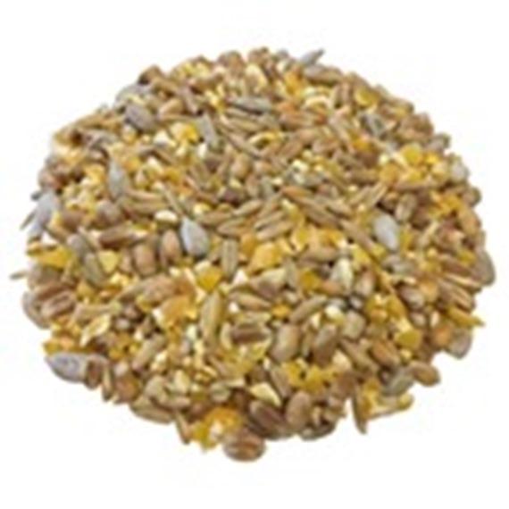 Premium Poultry Corn