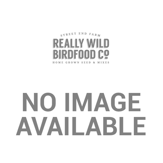 Black Steel Suet Treat Feeder