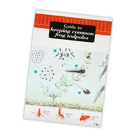 Guide to Keeping Common Frog Tadpoles