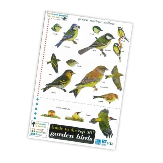 Field Guide to the 'Top 50' Garden Birds
