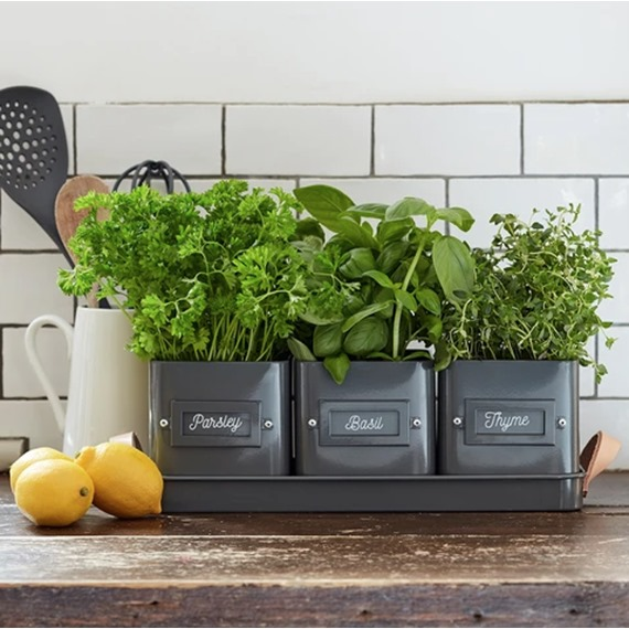 Herb Pots in Leather Handled Tray