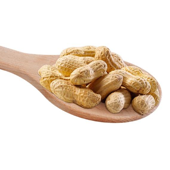 Peanuts in Shells ( Monkey Nuts)