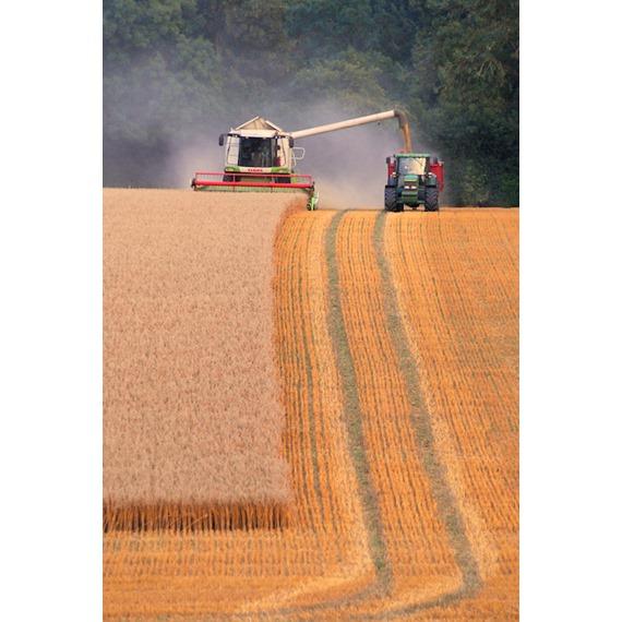 Original Farm Gold™ - Save 10% in September