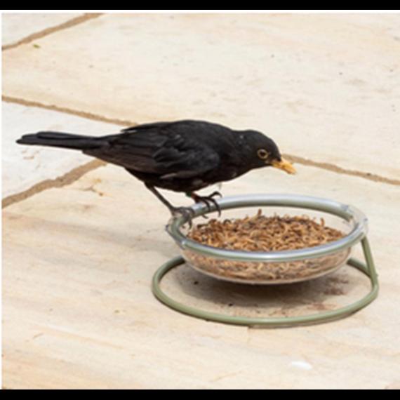 I Love Robin Easy-Clean Treat Dish