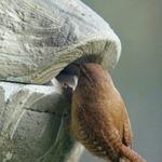 Roundhouse Wren Box
