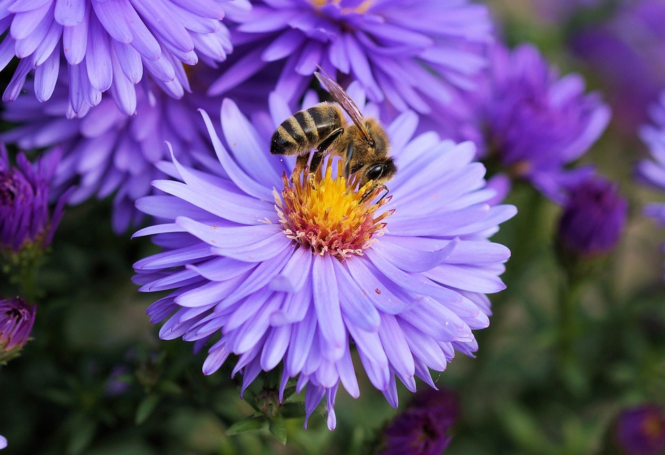 plants that attract bees,bee friendly plants,bee friendly flowers, flowers that attract bees