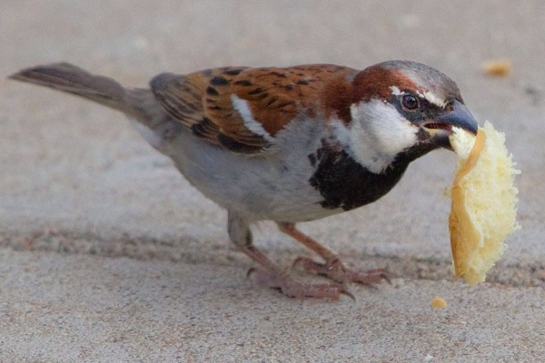 Bird with a scrap of food in its beak