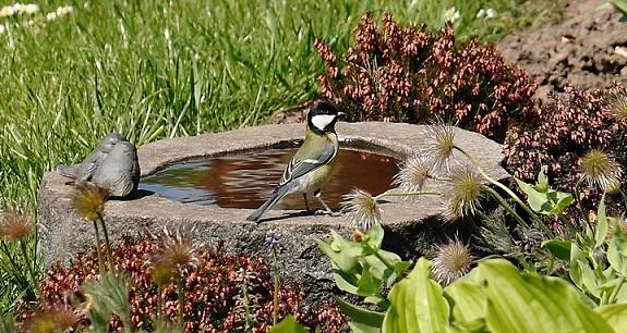 Bird on a garden bird bath