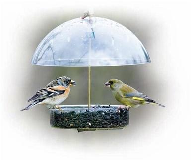Birds Feeding in Wet Weather