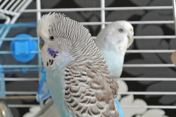 best diet for pet birds