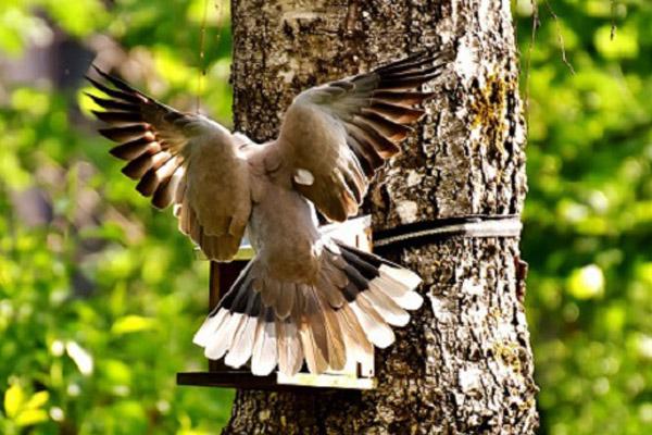 Bird feeding in garden