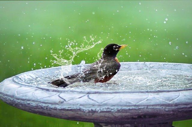 Bird splashing water in a bird bath