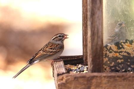 choose a bird feeder for your garden