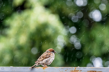 wet weather bird feeding